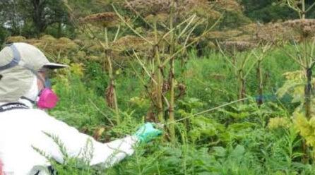 Glyphosate and Glyphosate-based Herbicides